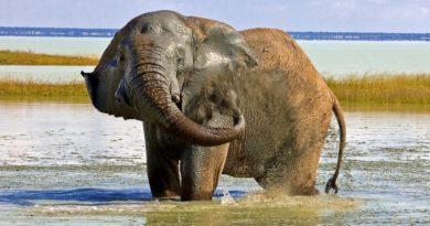 Kalender 2017: Namibias Tiere – von groß bis klein