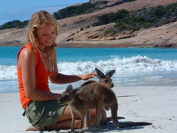 Fast überall in Australien trfft man natürlich auf Kängurus, wobei die kleineren Arten von den Australiern als Wallabys bezeichnet werden. Foto: WAT