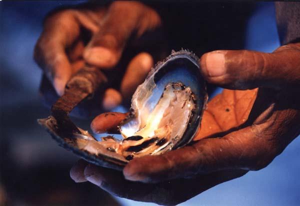 Katar: Vor einigen Jahrzehnten noch Perlenfischer - heute Milliardäre. Foto: QTA