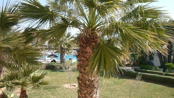 Überall Palmen - Blick aus dem Hotelzimmer. Foto: Fritsch