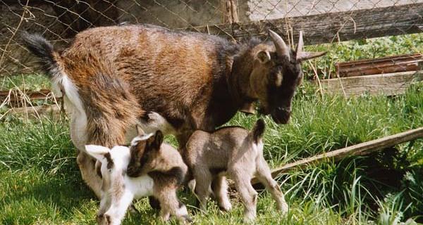 Landleben ausprobieren im Südlichen Allgäu