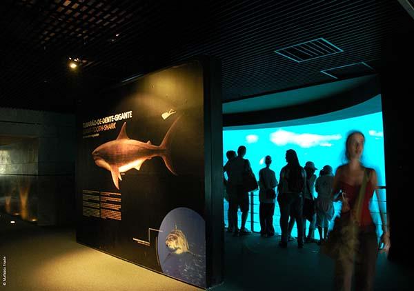 Die Nacht kostet 60 Euro pro Teilnehmer. Im Preis enthalten sind der Eintritt in das Ozeanarium, alle Aktivitäten, ein nächtlicher Imbiss und das Frühstück. Foto: Mafalda Frade