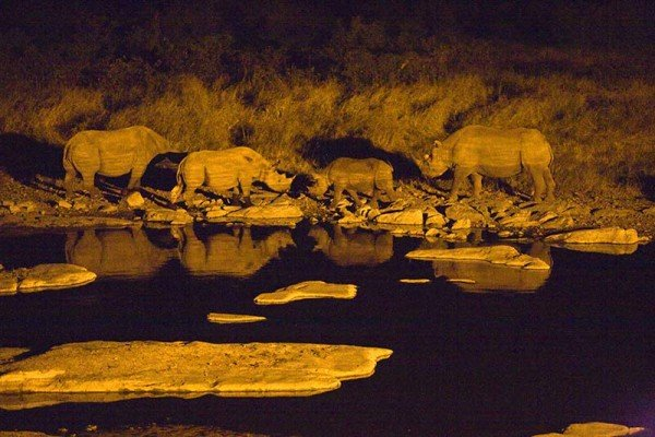 Nächtliches Nashorntreffen am Moringa-Wasserloch in Halali im Etosha National Park in Namibia. Foto: Ingo Paszkowsky