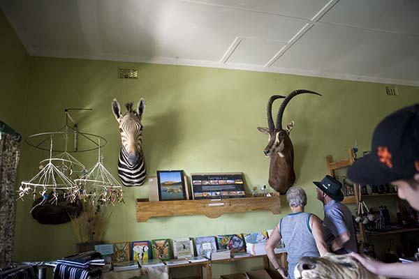 Ausgestopfte Tierköpfe überall gehören zum Inventar des Ladens in Solitaire. Foto: Ingo Paszkowsky