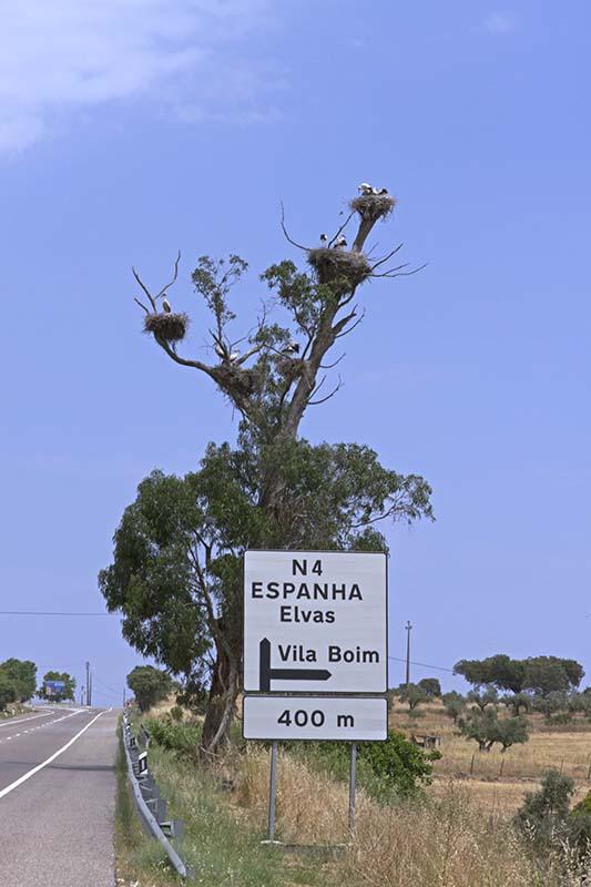 Storchenbaum an der N4 auf dem Weg nach Elvas. Foto: Ingo Paszkowsky
