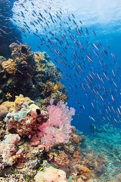 So sieht es meist am Great Barrier Reef aus. Foto: Tourism Queensland