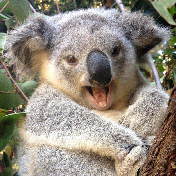 Foto: Tourism Queensland
