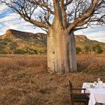 Blick auf die Cockburn Range mit einem Boab-Baum. Foto: Tourism Western Australia