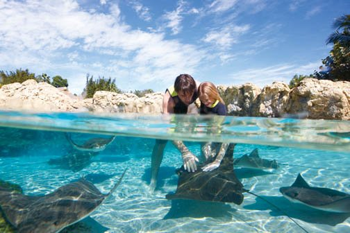 Foto: Discovery Cove / SeaWorld Parks & Entertainment