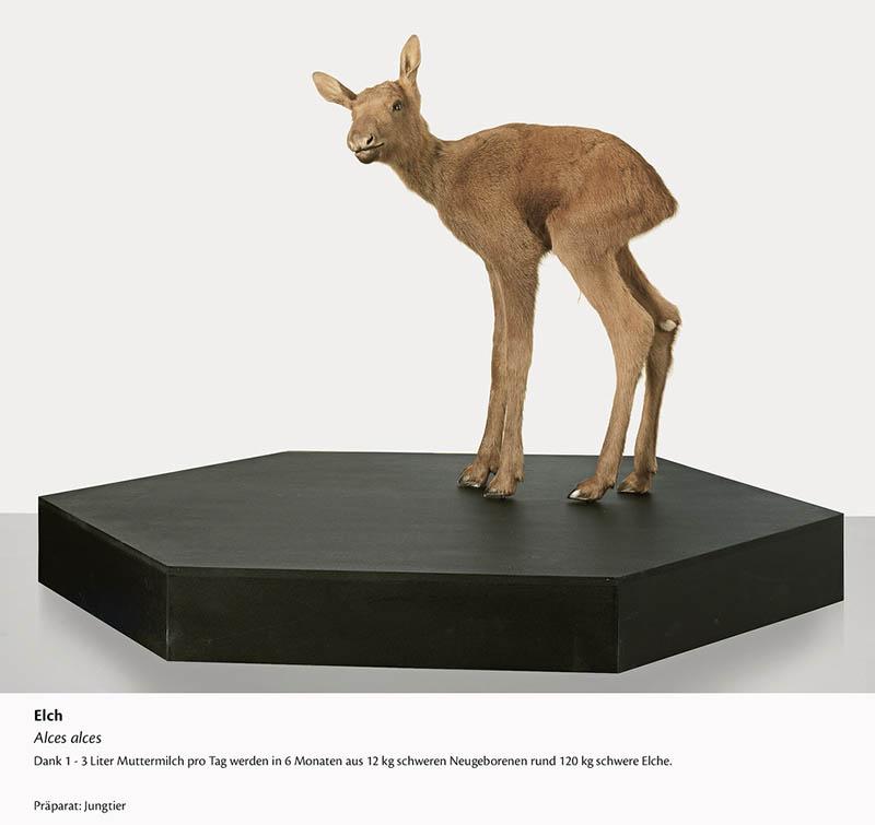 Foto: Liechtensteinisches Landesmuseum / Sven Beham
