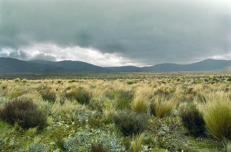 Neuseeland hat die perfekte Hobbit-Kulisse. Foto: Ingo Paszkowsky