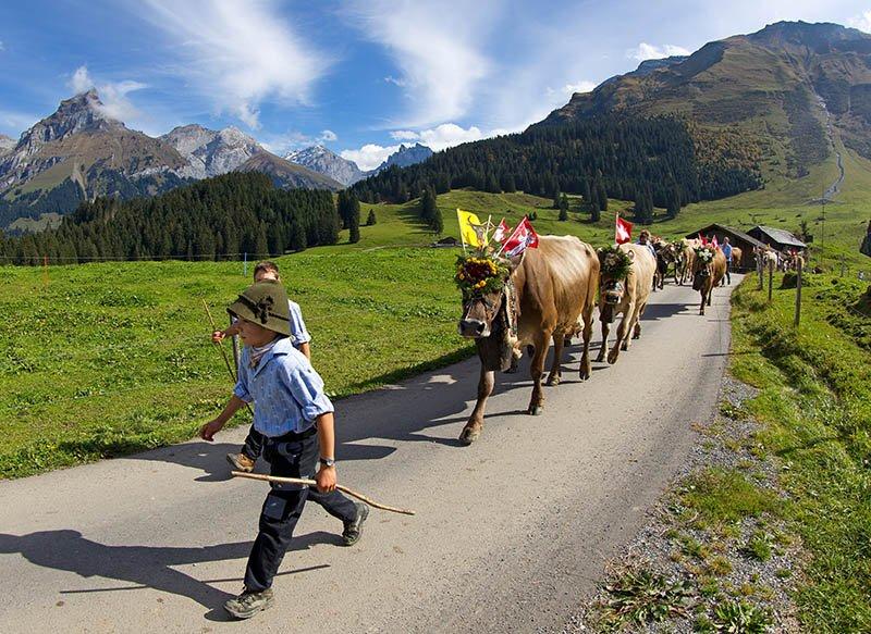 Beim Alpabzug in Engelberg helfen große und kleine Familienmitglieder, die Herde sicher ins Tal zu bringen. Foto: Engelberg-Titlis / Oskar Enander