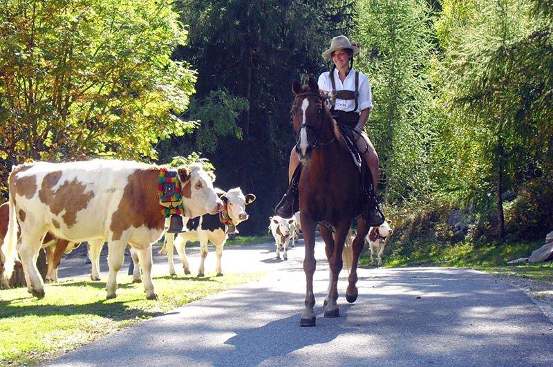 """Fesch sehen sie aus – alle miteinand. Bauersfamilie Weger feiert ihren kleinen, privaten Almabtrieb mit den hauseigenen Kühen im Ahrntal jedes Jahr gemeinsam mit den Gästen. Der """"Winklerhof"""" ist Mitglied von """"Roter Hahn – Urlaub auf dem Bauernhof in Südtirol"""". Foto: Winklerhof"""