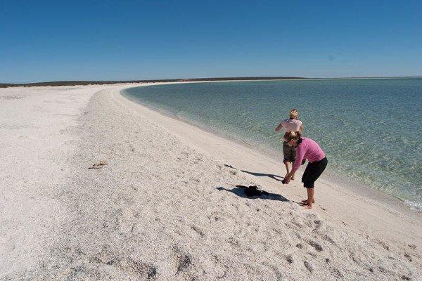 Der Shell Beach ist ein etwa 40 km langer Küstenstreifen an der westaustralischen Shark Bay, der aus einer bis zu 10 Meter dicken Schicht von Herzmuscheln besteht. Ohne Schuhe ist der Strand nicht begehbar. Foto: Ingo Paszkowsky