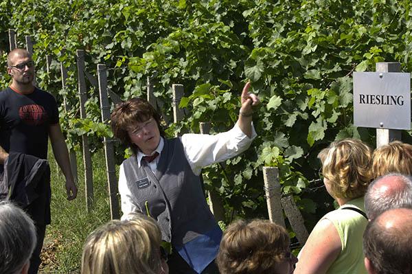 Führung zu den Tagen des offenen Weingutes in Sachsen, Foto: Tourismusverband Sächsisches Elbland e.V.