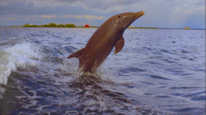 Foto: The Beaches of Fort Myers & Sanibel (Lee County)