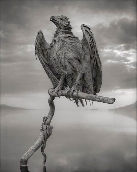 © NICK BRANDT, CALCIFIED FISH EAGLE, LAKE NATRON, 2012