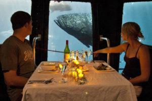 """Die neuen Gäste erreichen frühestens am nächsten Tag 11 Uhr den Ponton. Einen besonderen Einblick – in die vor allem nachts zum Leben erweckte Unterwasserwelt – bietet der """"Underwater Viewing""""-Raum. Hier wird auf Wunsch auch das Dinner serviert. Foto: Cruise Whitsundays"""