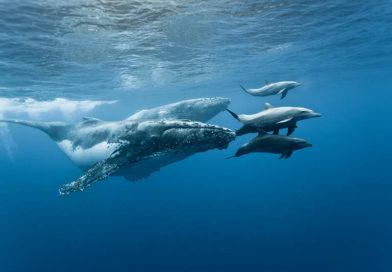 Haie, Wale und Wassersport auf La Réunion