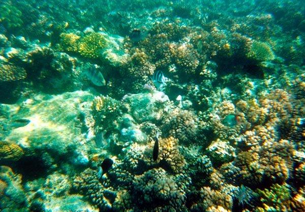 Barrier Reef. Foto mit einer Wegwerf-Kamera zur einmaligen Benutzung, ohne zusätzliches Licht. Dennoch täuscht das Foto - das Tauchen ist eingrandioses Erlebnis. Foto: Ingo Paszkowsky