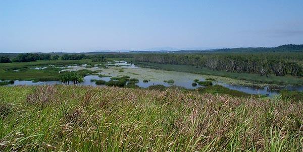 Sumpflandschaft in der Nähe von Cairns. Foto: Ingo Paszkowsky