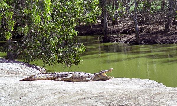 Sonnenbad in einer Krokodilfarm. Foto: Ingo Paszkowsky