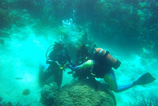 Tauchen am Barrier Reef. So sieht es aus, wenn Fotos ohne zusätzliches Licht geschossen werden. Foto: Ingo Paszkowsky