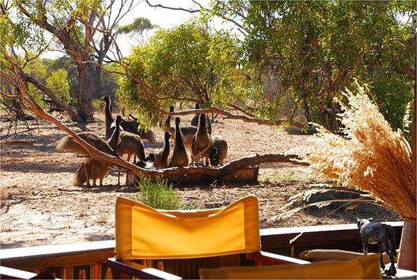 Neugierige Besucher. Foto: Kangulana Camp