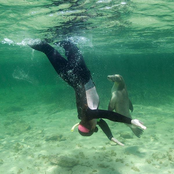 Ein besonderes Highlight ist der Ausflug nach Baird Bay, wo man mit Seelöwen und Delfinen schwimmen und schnorcheln kann. Foto: SATC