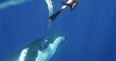 Schwimmen mit Buckelwalen. Foto: Sunreef