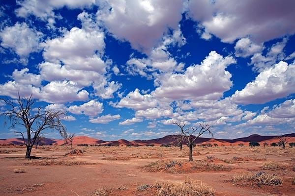 Überall Dünen und wenig Vegetation im Namib Naukluft Park. Foto: Ingo Paszkowsky