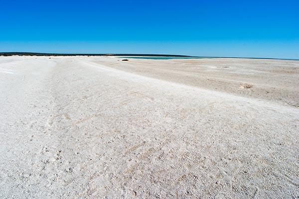Der Shell Beach ist ein etwa 40 km langer Küstenstreifen an der westaustralischen Shark Bay, der aus einer bis zu 10 Meter dicken Schicht von Herzmuscheln. Foto: Ingo Paszkowsky