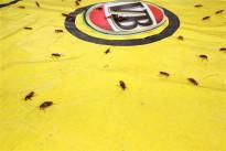 #Australien: Brisbane – Kakerlaken-Rennen am australischen Nationalfeiertag