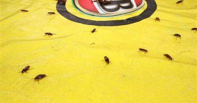 Australien: Brisbane – Kakerlaken-Rennen am australischen Nationalfeiertag