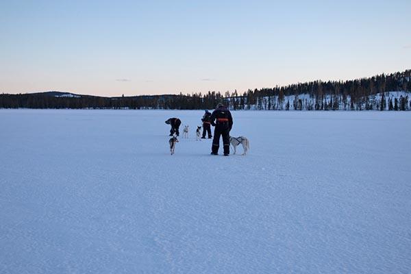 Schneeschuhwandern mit Schlittenhund bei Tamara. Foto: Ingo Paszkowsky