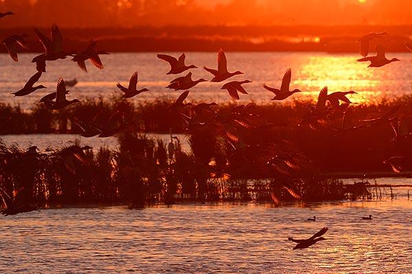 Wasservögel, vor allem Enten Anklamer Stadtbruch, Deutschland, Oder-Flussdelta. Foto: Staffan Widstrand, Wild Wonders of Europe