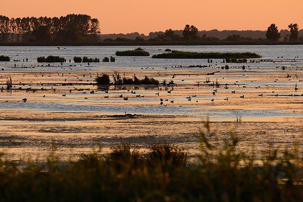 Wasservögel, vor allem Enten. Anklamer Stadtbruch, Deutschland, Oder-Flussdelta. Foto: Staffan Widstrand, Wild Wonders of Europe