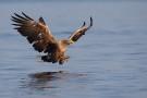 Oder-Delta wird achte Rewilding Europe Region