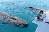 #Australien: Whale Watching in den Whitsundays