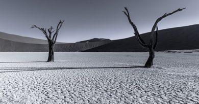 Ausstellung: Tom Jacobi – Grey Matter(s)