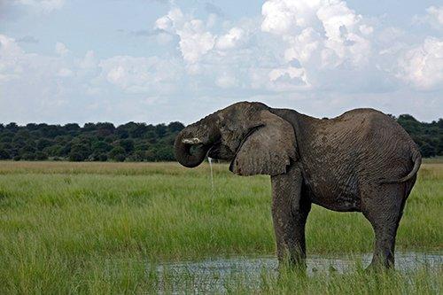 Mit einem kühlen Bad erfrischt sich ein Afrikanischer Elefant im Osten des Etosha National Park