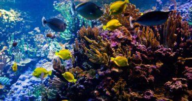 Vielfätige Unterwasserwelt von Hawaii