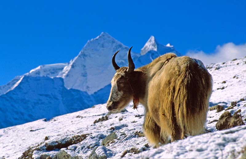 Nepal - Mt. Taboche. Foto: goXplore / Brian W. Skym