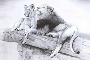 Wundervolle Originale und limitierte Kunstdrucke von Tieren aus Afrika und Asien