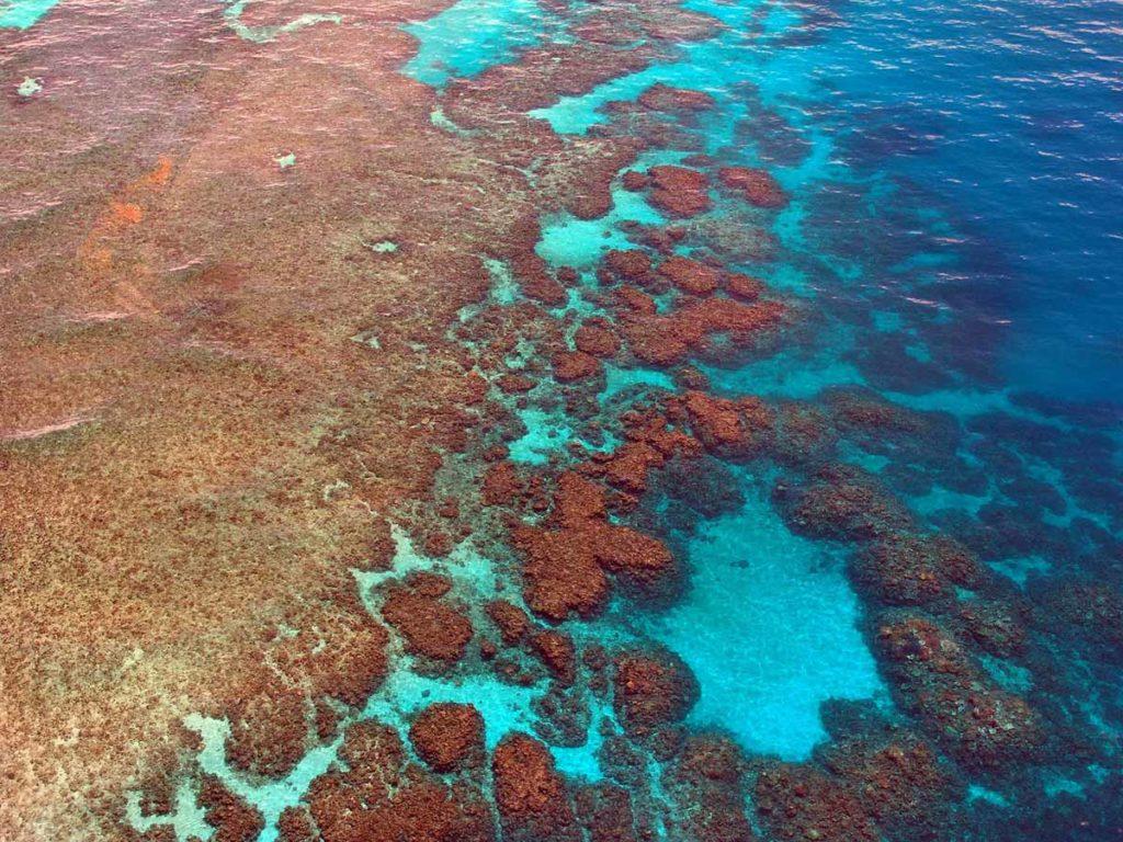 Natürlich denken die meisten Australien-Urlauber beim Gedanken an eine Tauch-Safari an das Great Barrier Reef. Doch es gibt noch andere er-tauchenswerte Details vor der Küste Australiens wie etwa Kangaroo Island, Ningaloo Reef, Christmas Island und The Yongala. pixabay.com © steinchen (CC0 Public Domain)