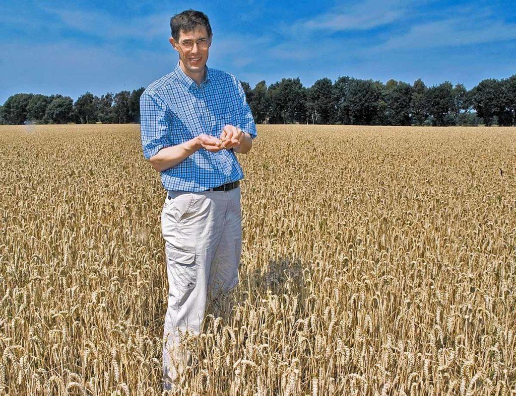 Kornherstellung im Emsland