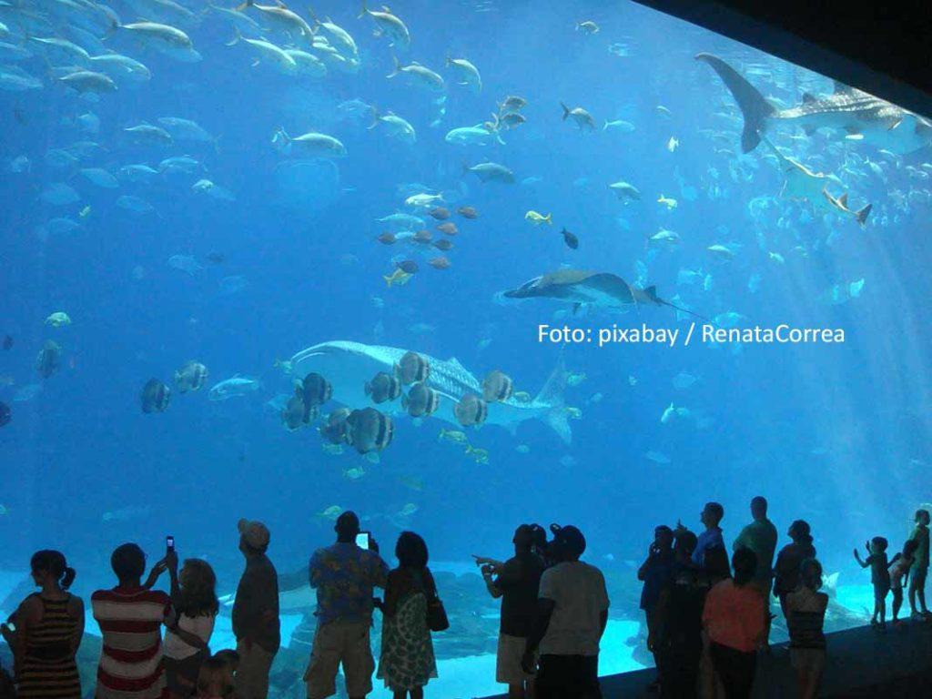 Das Georgia Aquarium ist das größte Aquarium der USA und beherbergt zahlreiche Becken mit mehr als 30 Millionen Litern Süß- und Meerwasser