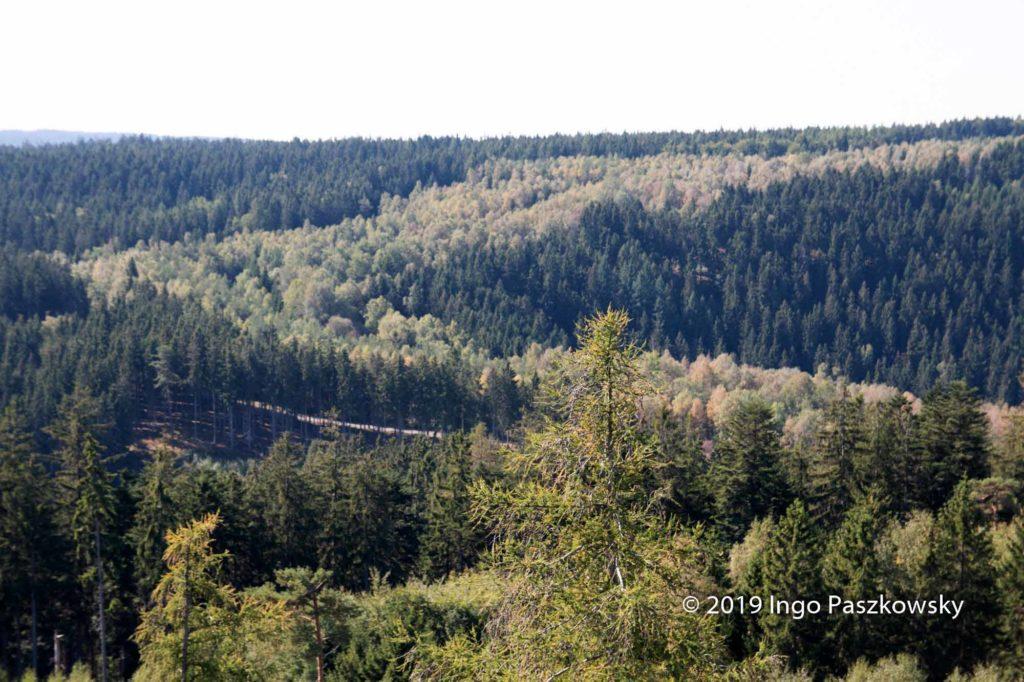 Ausblick von der Thüringer Warte. Der Verlauf der ehemaligen Deutsch-Deutschen-Grenze ist wegen der helleren und kleineren Bäume noch gut zu erkennen. / Foto: Ingo Paszkowsky