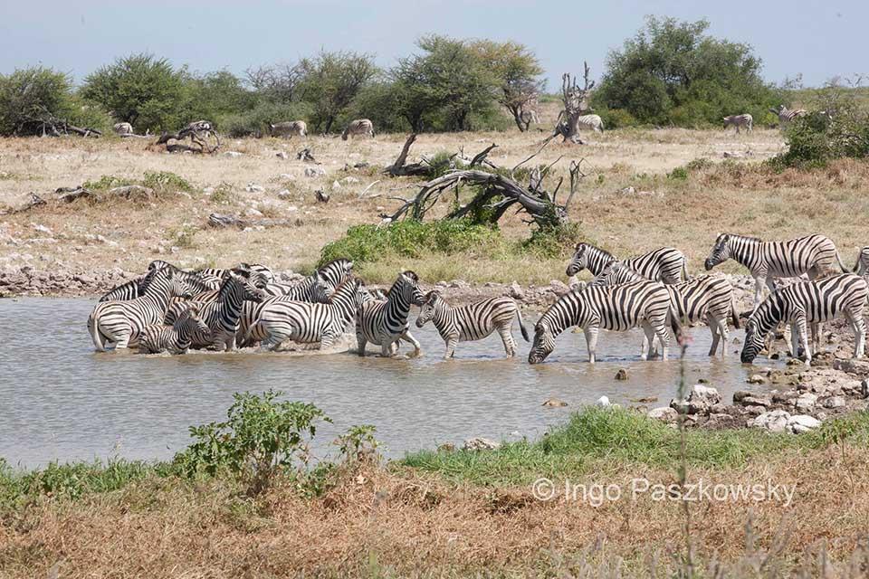 Wasserloch im Etosha National Park. Foto: Ingo Paszkowsky