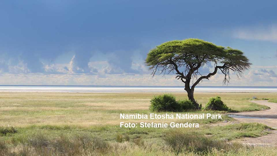 Etosha National Park / Foto: Stefanie Gendera